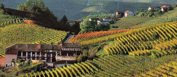 wine_piedmont_langhe_page